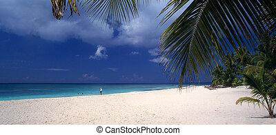 dominicano, isla, -, república, saona, playa