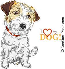 dommekracht, terrier, ras, vector, schets, dog, russell