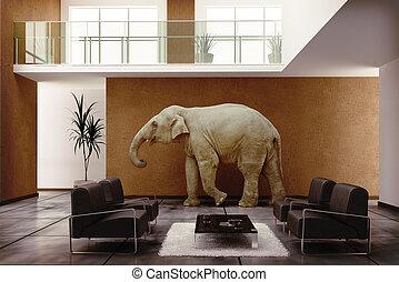 domovní, slon