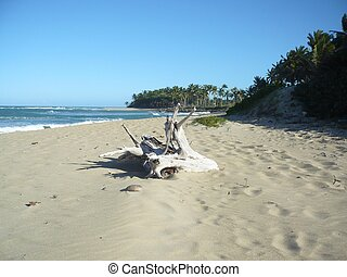 DomRep dream -playa Cangrejo Sosua - One of the places where...
