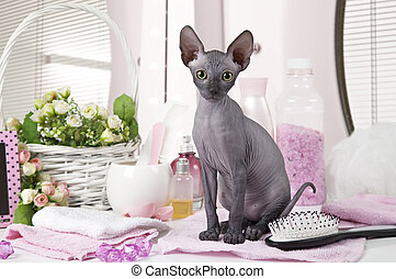 Don Sphinx kitty cat with some toiletries - Portrait of Don ...
