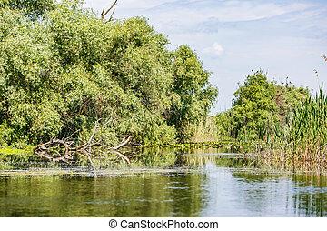donau, landschaftsbild, delta