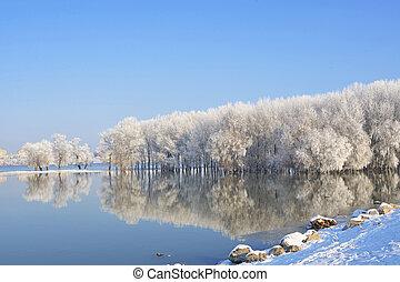 donau, winter, vorst, bomen, bedekt, rivier