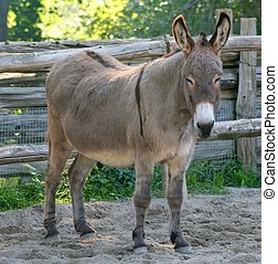 Donkey - A donkey standing by a fence