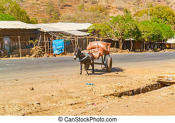 Donkey is pulling cart in a small village Negade Bahir in Ethiopia.