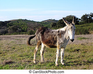 Donkey animal - Donkey on the countryside looking at the...