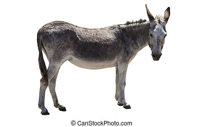 donkey animal isolated on white background