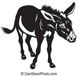 donkey black and white image