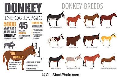 Donkey breeds infographic template. Animal farming. Flat...