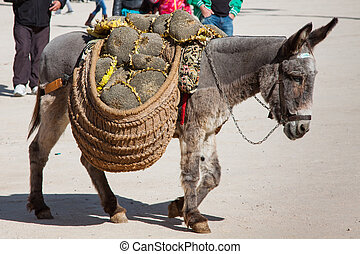 Donkey carrying a sunflower in chinchon near madrid