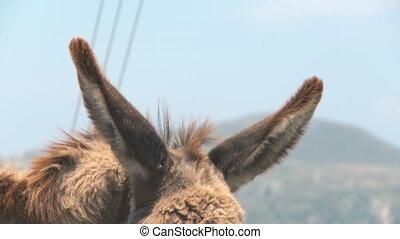 Donkey close-up on Naxos, Greece