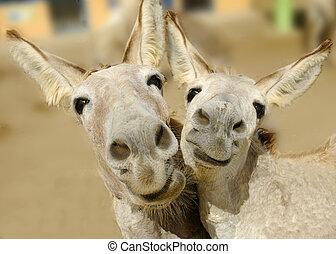 Two cream colored donkeys pose with happy smiles on their faces.