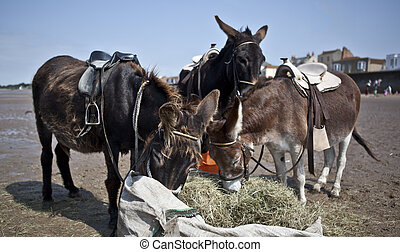 Donkey Eating Hay on Burnham-On-Sea Beach