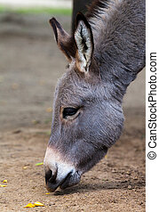 donkey eats on the ground