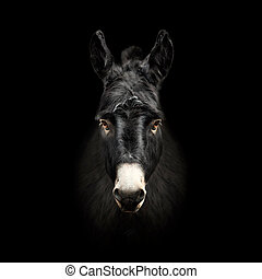 donkey face isolated on black background