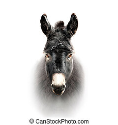 donkey face isolated on white