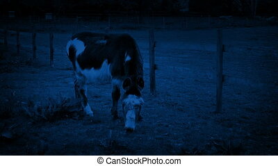 Donkey Grazing At Night