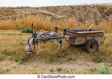 donkey harnessed to an iron cart stands on the banks of a river and eats grass