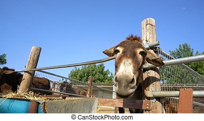 Donkey head close up shot on a farm on Cyprus - Donkey head...
