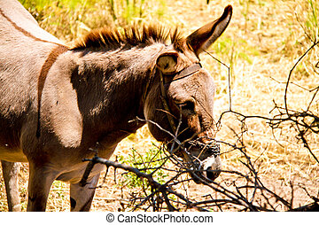 Donkey in a Field in sunny day, animals series