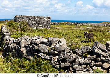 Donkey in Aran island - Donkey in Inishmore the main Aran...