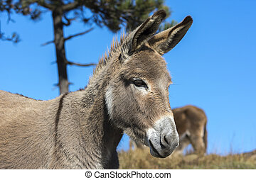 donkey in Liguria - donkey in the Ligurian countryside
