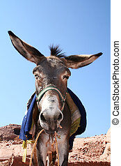 donkey in rock city Petra