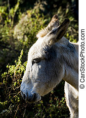 Donkey in the field on a sunny day