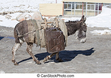 Donkey is carrying fuel cans in the mountains on the road...