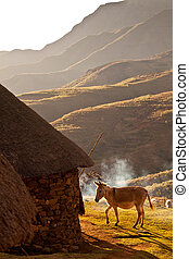 Donkey lit by evening sun