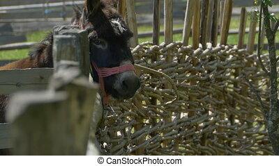 Donkey near Fence - A donkey near a wooden fence.