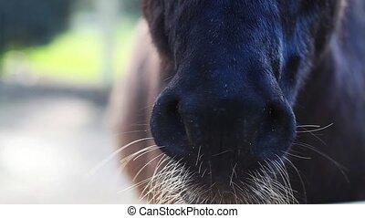 Donkey Nose in Barn