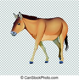 Donkey on transparent background