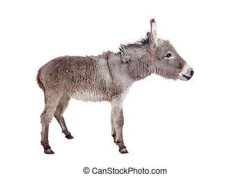 Donkey on white - Pretty Donkey isolated on the white...