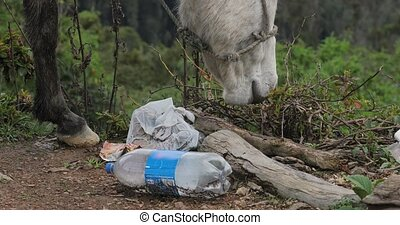 Donkey searching for feed between rubbish