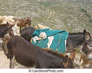 Donkey that transport white lambs