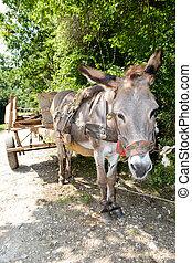 Donkey wagon in a tree shade