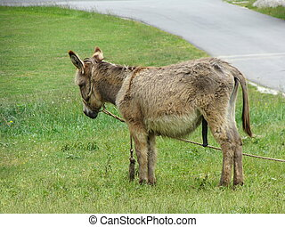brown donkey in the meadow