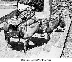 Donkeys At Lindos