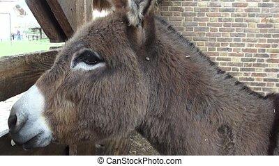 Donkeys, Farm Animals