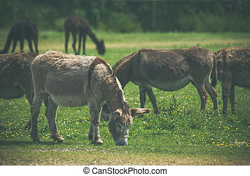Donkeys grazing on a green meadow