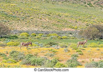 Donkeys in a field of wild flowers