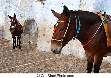 Donkeys in old mediterranean city - Donkeys at the Old Port...
