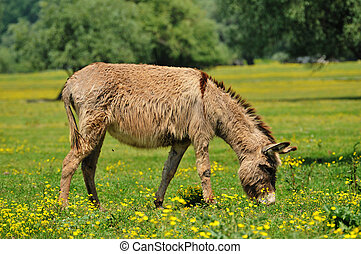 Donkeys in the pasture