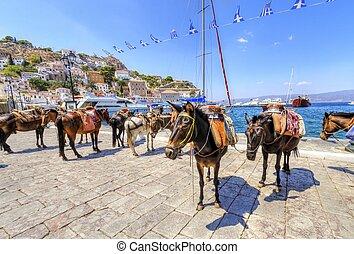 Donkeys on Greek island