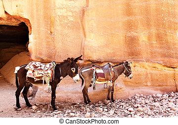 Donkeys with saddle near mountains. Petra. Jordan.