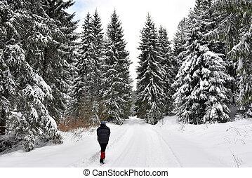 donna camminando, solo, in, inverno, foresta