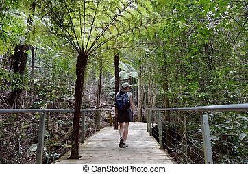 donna, camminare, su, uno, percorso, in, il, foresta pluviale