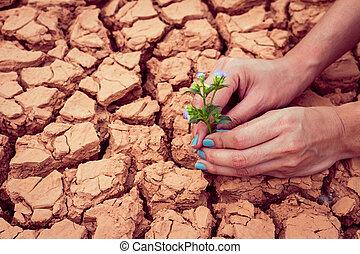 donna, fiore, tenere mani, crescente, terra, fesso