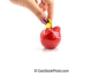 donna, oro, grande, isolato, maiale, rosso, mani, mettere, bianco, banca moneta